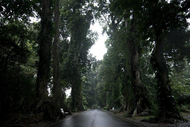 Hutan Hujan di Kota Hujan